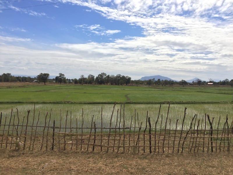 Pakse, Laos rice field